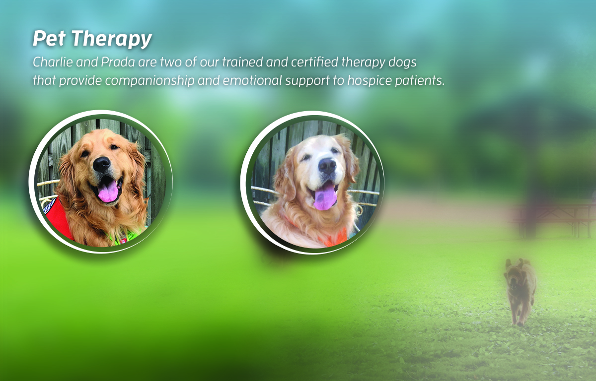 Dogs Therapy Banner